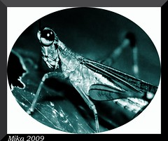 2009-Insectes