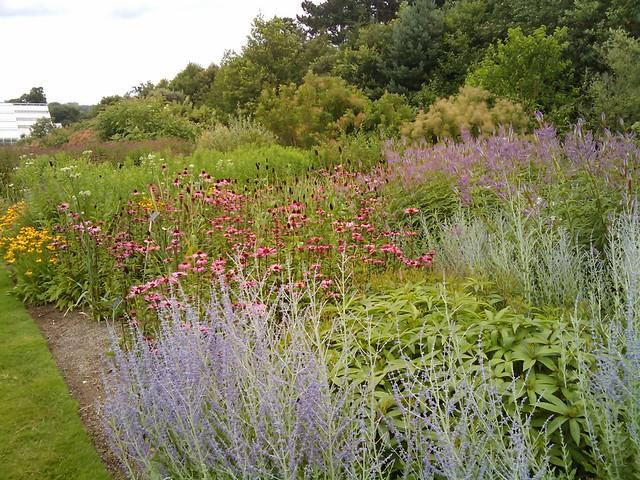 Perovskia perovskia atriplicifolia piet oudolf border for Piet oudolf pflanzplan