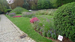 shrub, flower, garden, plant, yard, landscaping, hedge, lawn, walkway,