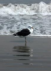 Revere Beach & Sea Gull