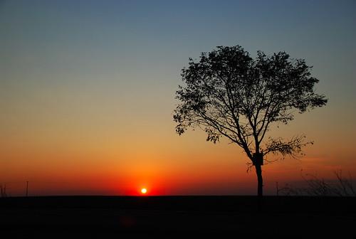 sunset sun tree sol brasil rural skyscape arbol atardecer paisagem cielo ms campo puestadesol arvore ceu matogrossodosul entardecer fronteira pordesol pontapora brasilparaguay