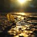 golden hour by sollerman