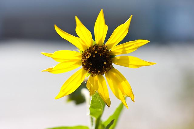 Flower_0037.jpg