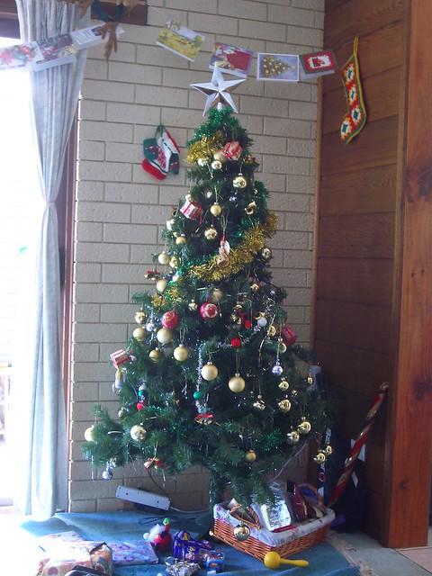 Christmas Tree Farm Canberra