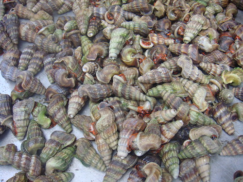 Edible snails