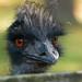 Emu by neonfish3