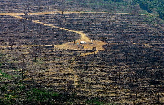 A Verdade Sobre o Desmatamento no Brasil