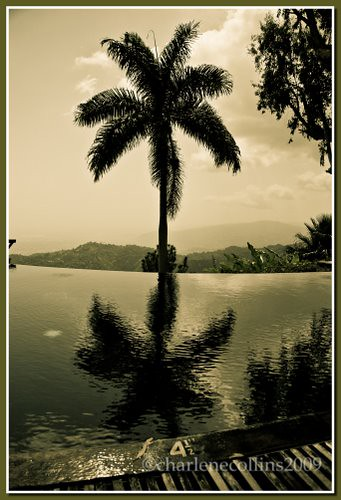 pool palm jamaica infinitypool strawberryhills