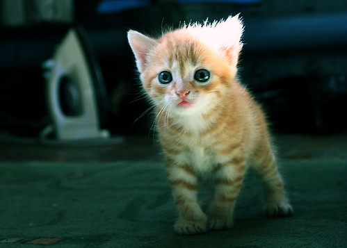 cute-kitten 02 by arseniy4