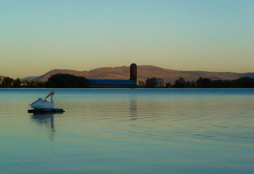 pictures sunset pelicans oregon landscape lumix photo downtown image photos picture panasonic adobe kayaking wigwam lightroom waterscape moik klamathfalls whitepelicans teepeeburner adobelightroom vetspark wigwamburner lakeewauna tz5 dmctz5 veterenaspark pelicansinrepose