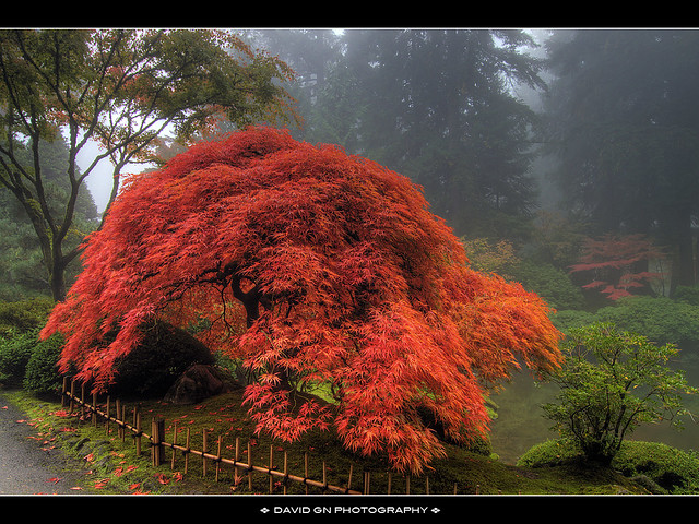 One Foggy Fall Morning at Portland Japanese Garden 3