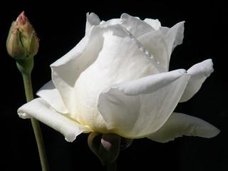 Para mis Amigos de Flickr..tengan ustedes un gran dia!