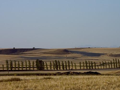 cultivo cereal tierra de campos
