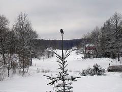 vinter på orust