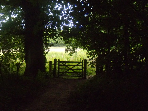 Gate out of the wood