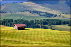 Dolomiti Alpe di Siusi - il prato falciato