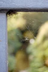 Spider web on the bridge