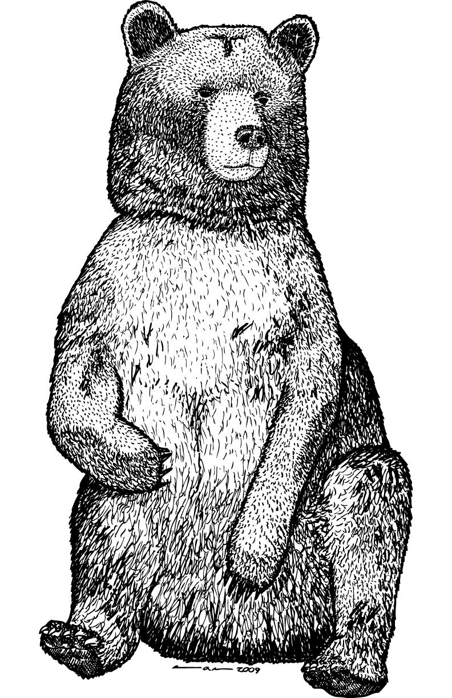 Sitting Bear Drawing Original 792 × 1224