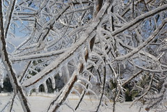 branch, winter, tree, snow, ice, frost, freezing, twig,