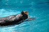 Photo:20090812 Notojima Aquarium 15 (Hip) By BONGURI