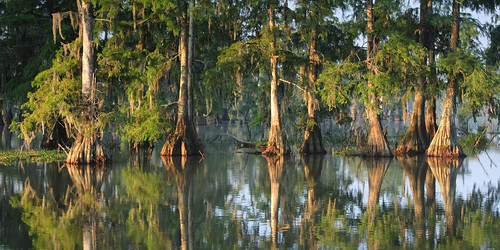 morning trees sun lake reflection water sunrise la moss louisiana lafayette ben row swamp spanishmoss pierce cypress preserve acadiana lakemartin photocontesttnc09
