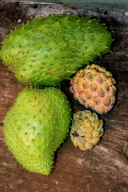 Soursop and Sweetsop | Flickr - Photo Sharing!
