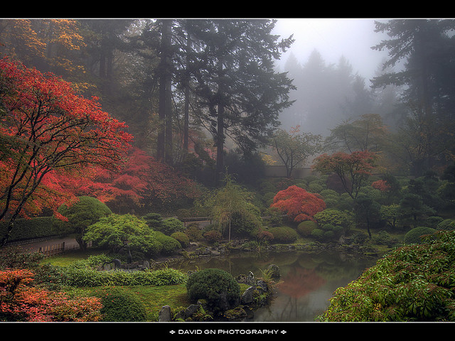 One Foggy Fall Morning at Portland Japanese Garden