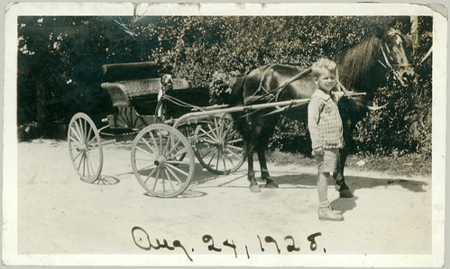 Horse, boy dog