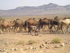 10 Melhores momentos em Marrocos