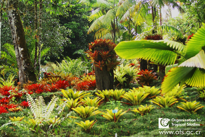 Jard n bot nico wilson explore organization for tropical for Jardin wilson