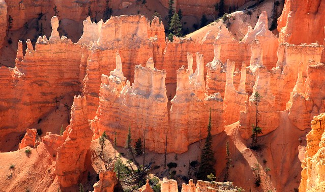Hoodoos in the Queens Garden, Bryce Canyon