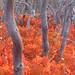 Mesa Verde Oak Brush in Fall by FeVa Fotos