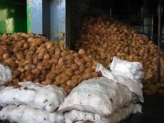 India - Koyambedu Market - Coconut 03