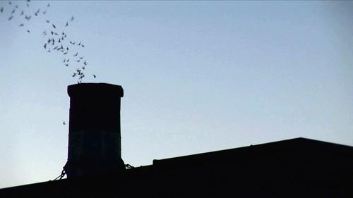 Chapman Swifts silhouette entry