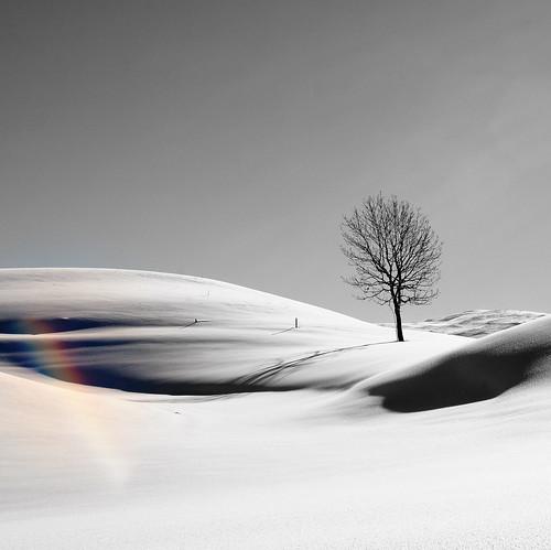 snowbow