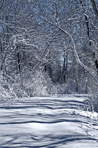 snowy trail by Alida's Photos
