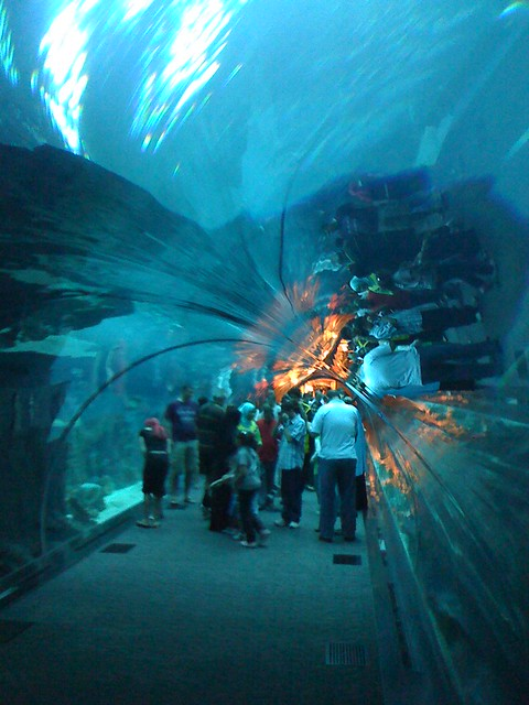 Dubai Aquarium & Underwater Zoo - The Dubai Mall - a photo ...