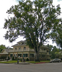 big tree, nice house