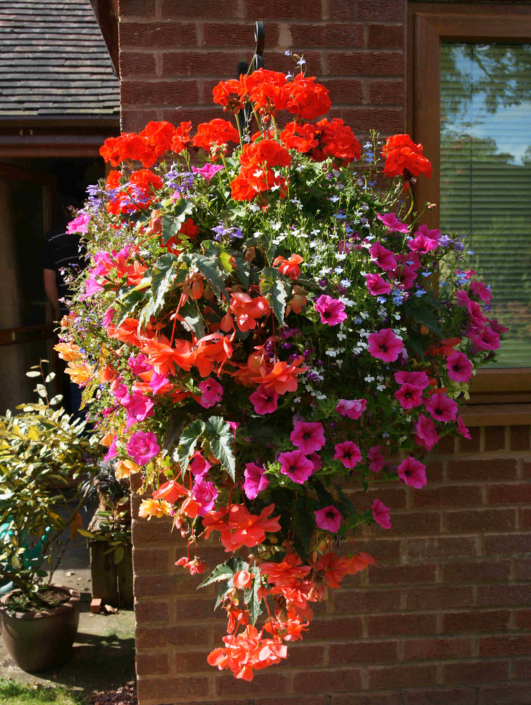 Best Flower Combinations For Hanging Baskets : Best flowers for hanging baskets