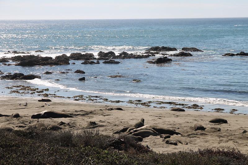 Pismo Beach, Feb 2014