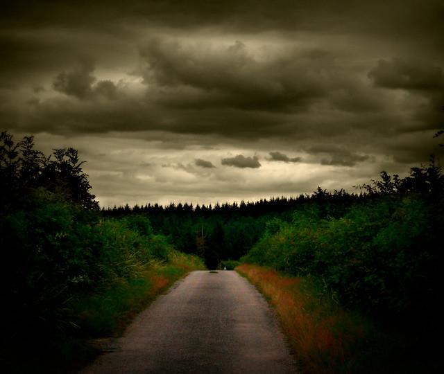546 Dark Forest