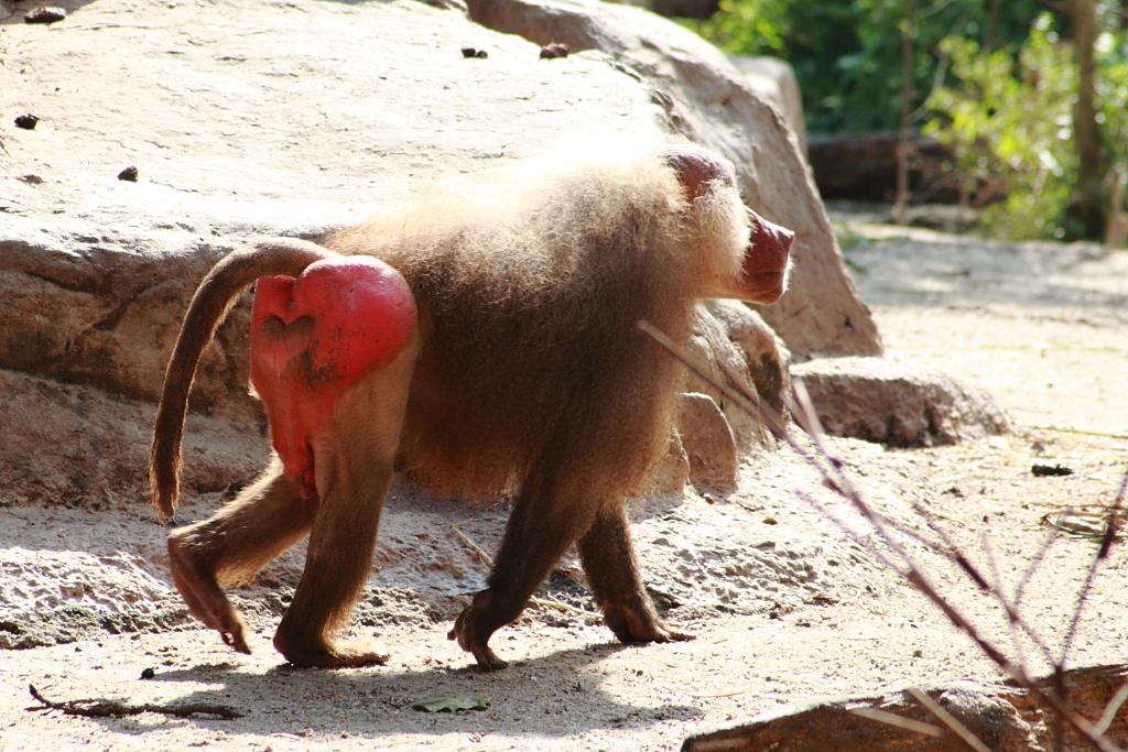 Monkey ass by yimmymerkaba on deviantart