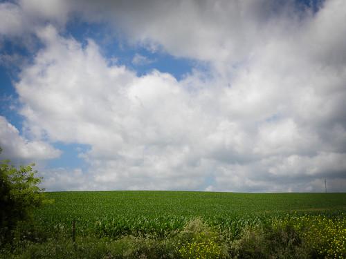 blue sky green farmland cornfields cloudyday perfectsunsetssunrisesandskys nikoncoolpixp90