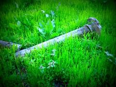 Grass ruines