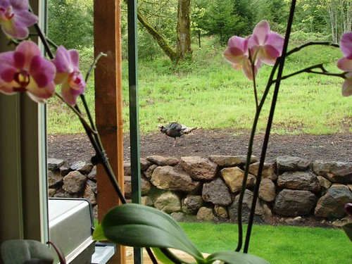 Turkey & Orchids