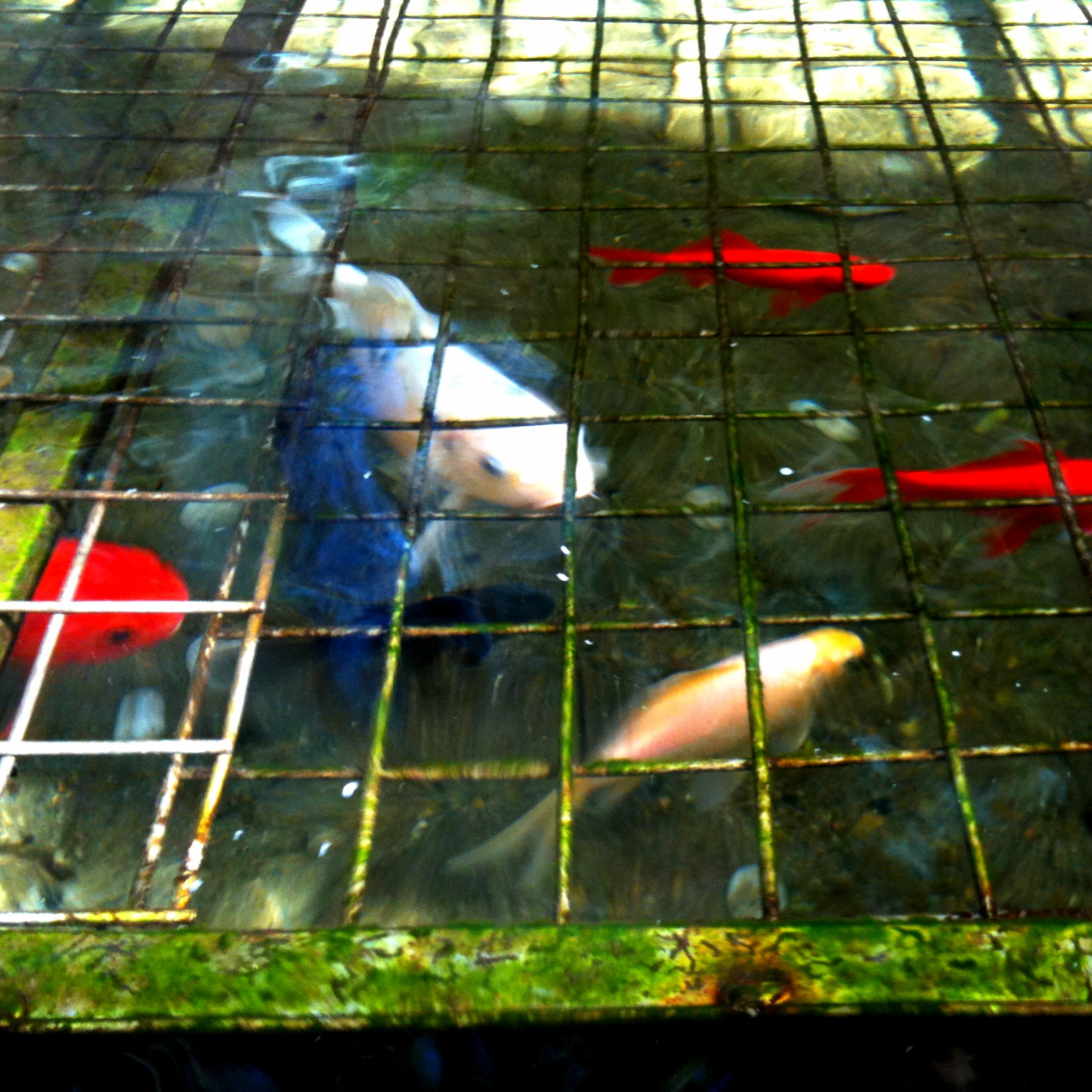 Amazing hospital koi pond flickr photo sharing for Amazing koi ponds