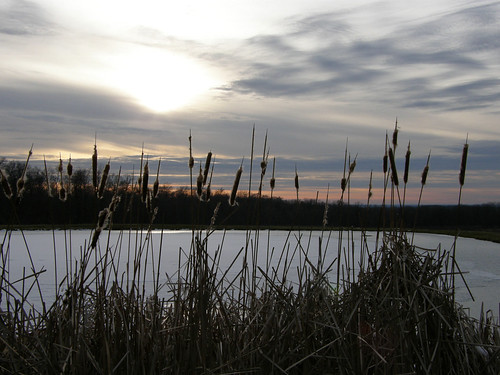 Winter Sunset at the Cattail Pond