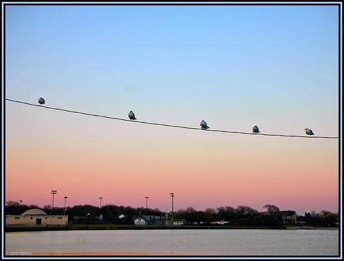 2009 afternoon america azure beach birds blue bluesky boardwalk buildings docks dusk eastpatchogue greatsouthbay holiday imran imrananwar landscapes longisland marina marine nature newyork nikon outdoors patchogue pink seascape seaside sky skyascanvas sunset tranquility turquoise usa water
