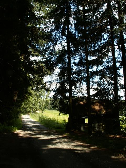 Vogtland Wald in Demut