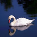"Cincinnati - Spring Grove Cemetery & Arboretum ""Swan Reflected - Self Aware?"" by David Paul Ohmer"